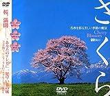 さくら 名所を彩る美しい季節の魔法 [DVD]