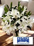 Project HOPE Siberia Lilies