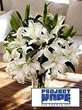 Project HOPE Siberia Lilies