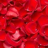 Best Red Rose Petals | 4200 Rose Petals Red