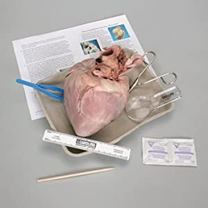 Young Scientist's Heart Dissection Kit