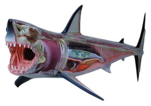 スカイネット 立体パズル 4D VISION 動物解剖 No.02 ホホジロ鮫解剖モデル