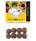 SeedBallz - Sunflowers