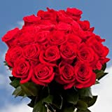 Birthday Red Roses- 50 Red Roses