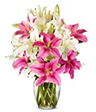 Flowers - Stunning Pink and White Lilies (FREE Vase Included)