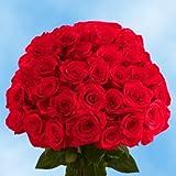 Fresh Cut Dark Red Roses   75 Black Magic Roses Long