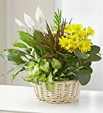 1-800-Flowers - With Love Dish Garden & Fresh Cut Flowers - Large