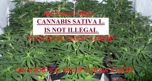 CANNABIS SATIVAL L. IS NOT ILLEGAL (CANNABIS SATIVA L. IS NOT ILLEGAL Book 1)