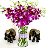 Just Orchids - Premium Long Stem Purple Dendrobium with Vase