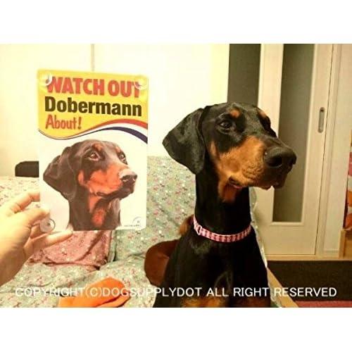 WATCH OUT Rottweiler 画像イラストサインボード:ロットワイラー 英語看板 イギリス製 Made in U.K [並行輸入品]