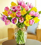 1-800-Flowers - Timeless Tulips - Large