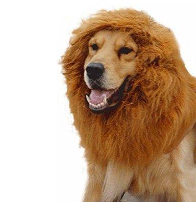 【 犬用 ライオン 変身 グッズ 】 変身 フード ネックウォーマー