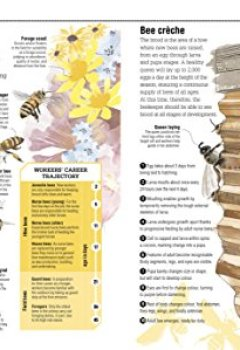 Telecharger The Bee Book Discover The Wonder Of Bees And