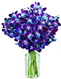 Blue Orchid Fresh Flower Bouquet (20 Stems) - With Vase