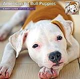 Magnet & Steel 6718 2015 Wall Calendar, American Pit Bull Puppies