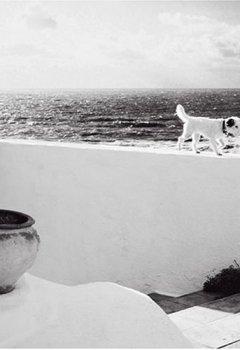 Cover von Moneypenny the Dog: Eine Hommage an einen Hund, die Fotografie und das Leben: A Homage to a Dog, Photography, and Life Itself