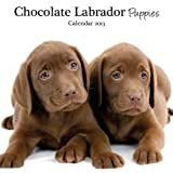 Magnet & Steel Labrador Choc Puppies Mini Wall Calendar