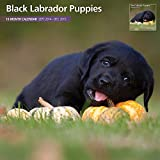 Black Labrador Puppies 2015 Wall Calendar