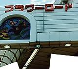世界のフラワーロード(DVD付)