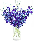 Fresh Cut Flowers - Blue Orchid with Vase