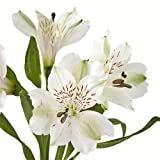 Wholesale Alstroemerias, White Peruvian Lilies in Bulk (80 White)