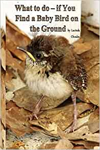 What to do- if You Find a Baby Bird on the Ground: Lucinda ...