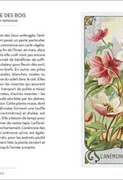 Livres Couvertures de Le petit livre des plantes sauvages