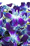 Fresh Cut Flowers - Dendrobium Orchids Bom Tinted Blue (Free Ribbon)