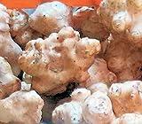 送料無料 和歌山産 菊芋(キクイモ)生 5kg(土付き)無農薬 テレビで話題のスーパーフード