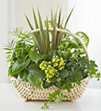 1-800-Flowers - Thinking of You Dish Garden - Large