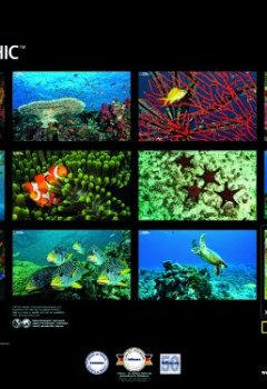 Cover von National Geographic Oceans calendar 2012