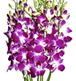 Just Orchids - Premium Long Stem Purple Dendrobium