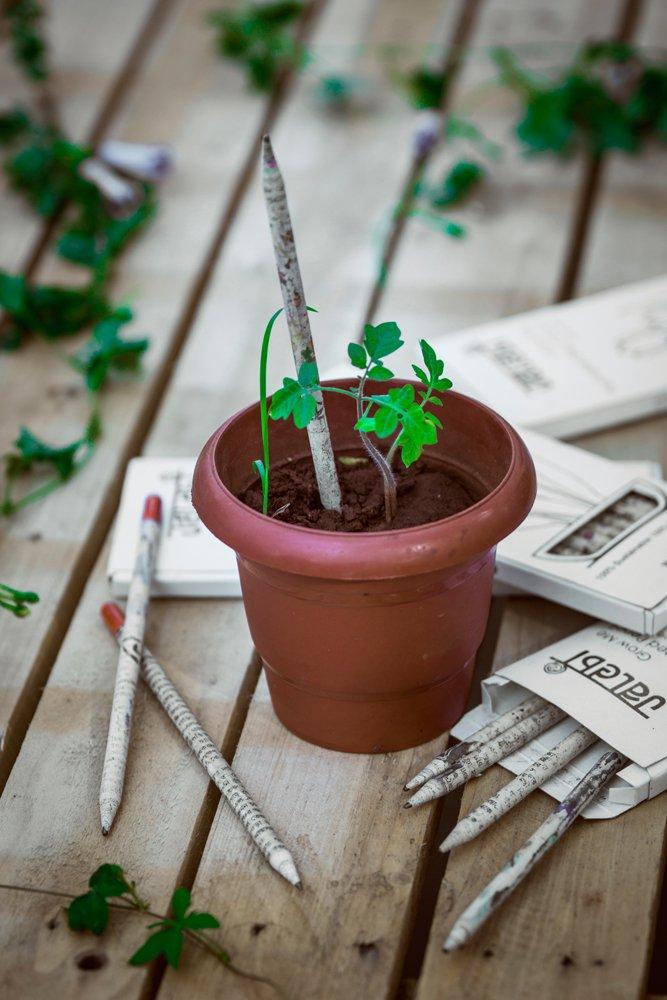 Grow Me Plantable Pencil