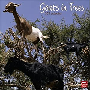 Goats in Trees 2011