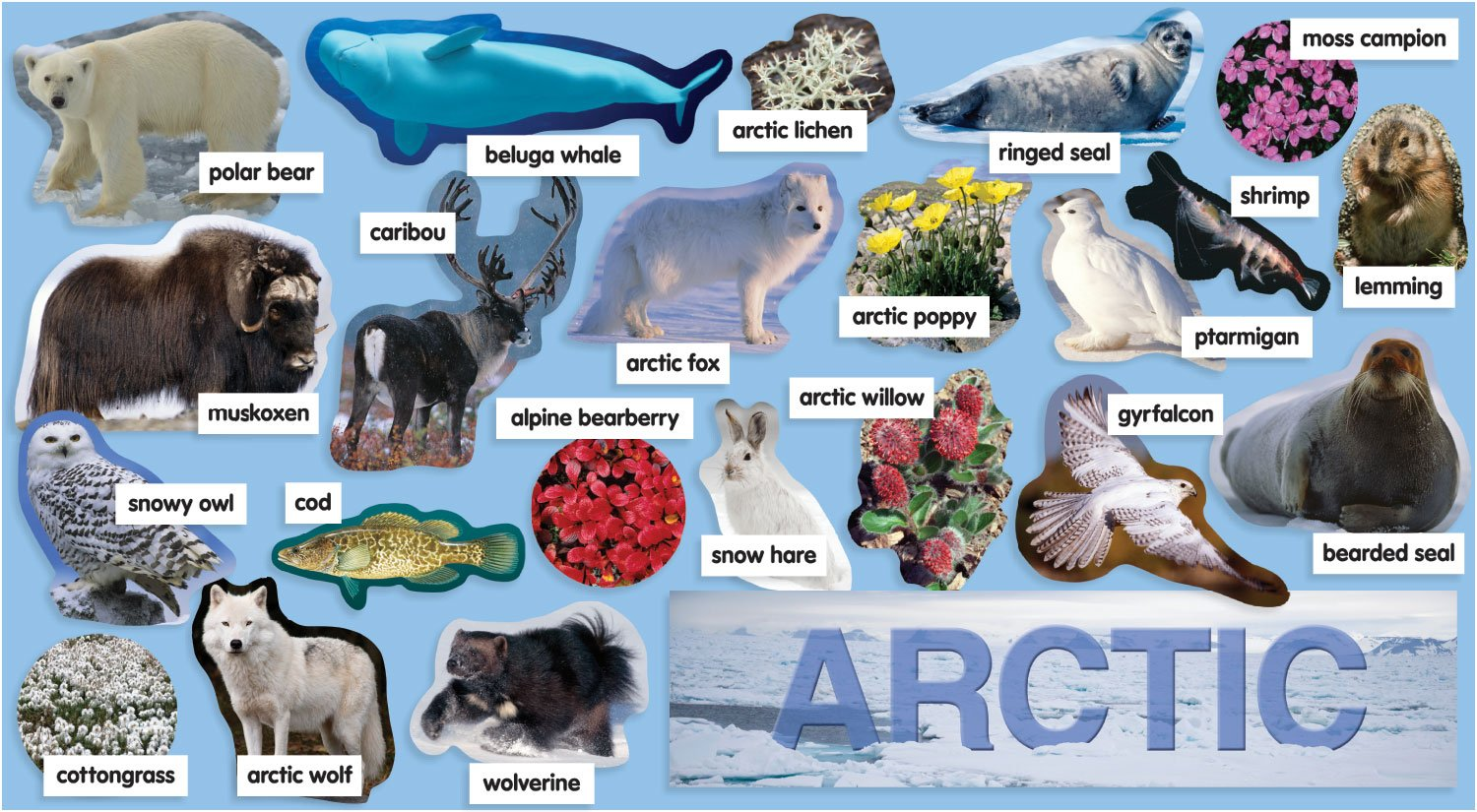 Arctic Ocean Animals And Plants