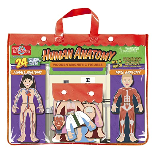 T.S. Shure Human Anatomy Wooden Magnetic Figures