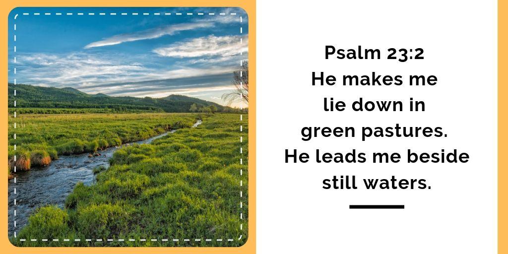 Green Pastures Eczema Devotional
