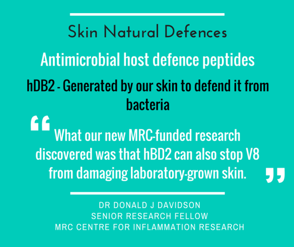Skin defences against staph bacteria protease v8