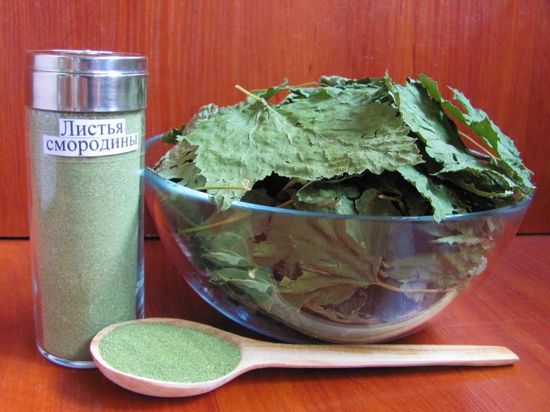 Листья смородины при простатите действие свечи от простатита