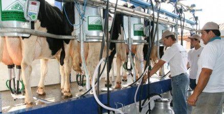 Produção de leite poderá ser isenta de IPI