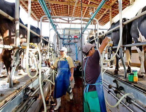 Fim da isenção fiscal para leite de outros países