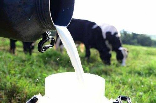Deputado propõe audiência pública para debater instruções normativas do leite