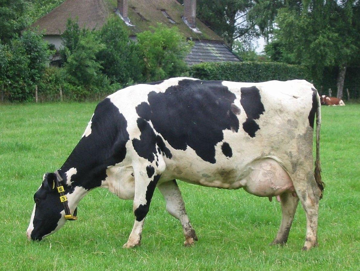 PB: Seminário vai debater cooperativismo na produção e comercialização de leite