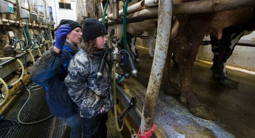 'We need to be heard now because time is running out': Wisconsin Dairy farmers seek higher milk prices