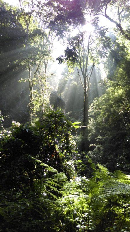 Rainforest views