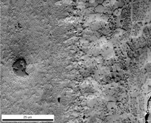 Figure 9: PRIAS™ Bottom Detector Image.