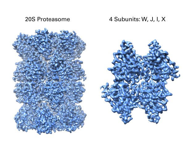 Breakthrough K3 result: 2.7 Å structure of the 20S Proteasome with the K3 camera and Elsa cryo-holder on a TF20. Data courtesy of Alexander Myasnikov, Michael Braunfeld, Yifan Cheng, and David Agard.