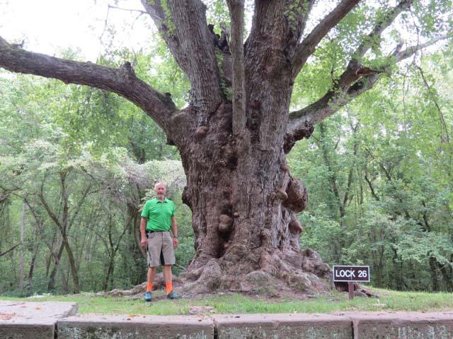 36 Black Walnut Tree at Lock 26 | Edek's Attic