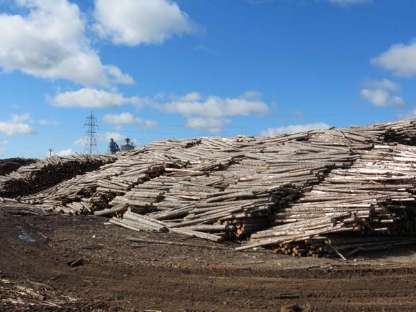 Veloroute des Bleuets - Lumber Industry in Quebec