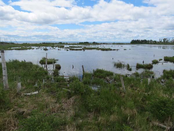 Veloroute des Bleuets - Parc National de la Pointe-Taillon Bog